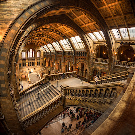 Natural History Museum by Nick Moulds - Buildings & Architecture Public & Historical ( interior, england, london, museum, natural history museum )