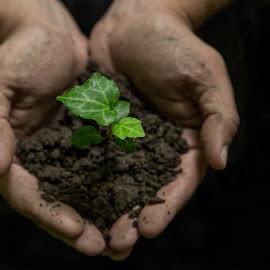 Cherished by Mihaela Jurca - Nature Up Close Other plants ( love, nature, cherish, care, earth )