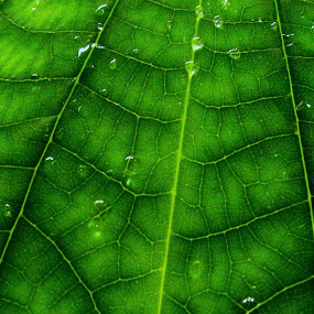 design by Srabani Mitra - Nature Up Close Leaves & Grasses ( leaves )