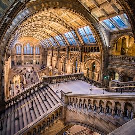 Natural history museum, London by Terje Jorgensen - Buildings & Architecture Public & Historical