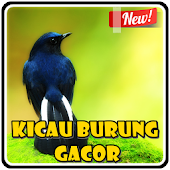 Kicau Burung Gacor APK for Bluestacks
