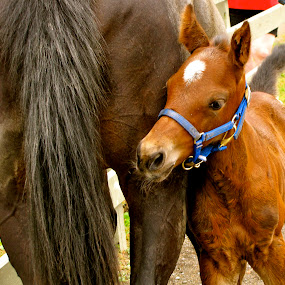 Love Every Part of Your Mom by Emily Jones - Animals Horses ( animals, farms, horse, baby, mom )