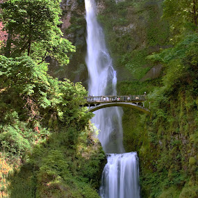 Falls at the Lodge by Clyde Smith - Landscapes Waterscapes ( waterfall, columbia river gorge )