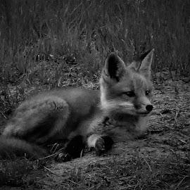 by Denise O'Hern - Black & White Animals
