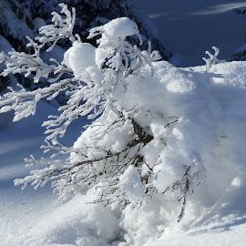 Winter in Brambrüesch by Serguei Ouklonski - Landscapes Travel ( brambrüesch, frost, crystal, apls, frozen, graubünden, alpine, winter, season, cold, chur, ice, snow, switzerland )