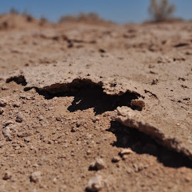From Down Here by Savannah Eubanks - Nature Up Close Sand ( sky, sand, blue, bushes, desert, brown )