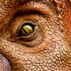 by Alice Gipson - Artistic Objects Still Life ( pwcstilllife-dq, dinosaur, alicegipsonphotographs, eye )