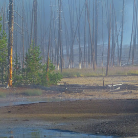 Ghost Trees by Marilyn Kircus - Landscapes Caves & Formations ( fumeroles, norris basin, fog, trees, volcanic activity, yellowstone np, steam )