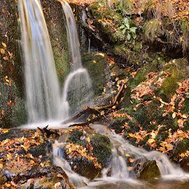 Autumn by Neli Dan - Landscapes Waterscapes ( leaves, autumn, lights )