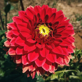 Flower by Zachary Taylor - Instagram & Mobile Android ( red, green, ground, dirt, flower )