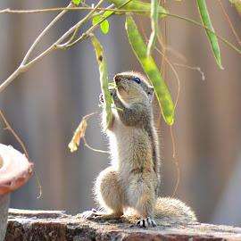 by Bhaskar Patra - Animals Other Mammals