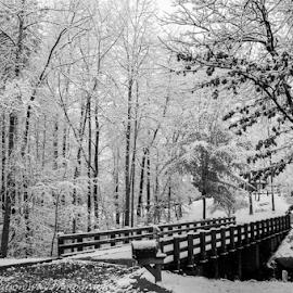 Snowy Bridge by Myra Brizendine Wilson - Landscapes Weather ( snow on bridge, bridge with snow, snow, trees, bridge, snow on trees, trees with snow,  )