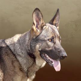 Suki by Laura Greene - Animals - Dogs Portraits