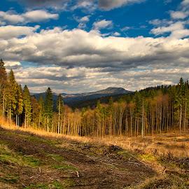 Les. by Ján Hrmo - Landscapes Forests ( les, obloha, stromy )