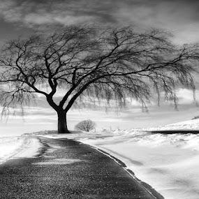 The Tree by Ken Smith - Black & White Landscapes ( winter, black and white, solitude tree, nebraska )