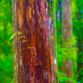 New Growth by James Newberry - Nature Up Close Trees & Bushes ( nature, tree, outdoor, vibrant, pine )