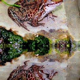 Reflet au bord de l'eau by Gérard CHATENET - Animals Amphibians