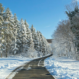 by Siniša Almaši - Landscapes Weather ( natural light, white, forest, road, landscape, woods, nature, tree, snow, path, trees, weather, view, light )