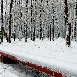 bench by Vygintas Domanskis - City,  Street & Park  City Parks ( red, tree, bench, kaunas, snow, trees, lithuania, cityscape, city park, city )