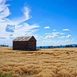 Fields of Home by Barbara Brock - Landscapes Mountains & Hills ( one barn, cloudy skies, old barn, barn alone, prairie, wheat fields )
