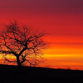 by Nediljko Prološčić - Landscapes Sunsets & Sunrises