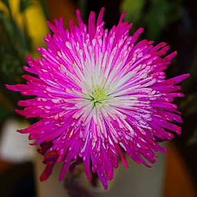 by Mark Cavanah - Flowers Single Flower