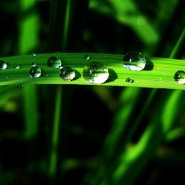 DROPS OF WA by Mak Azad - Nature Up Close Water