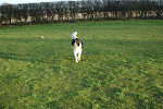 At Warley Cross All Dogs Enjoy Off-Lead Exercise Three Times Daily