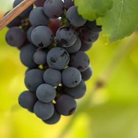 by Anngunn Dårflot - Food & Drink Fruits & Vegetables