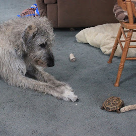 come on. play with me Pweeezzzzeee by Colette Griffin - Animals - Dogs Playing