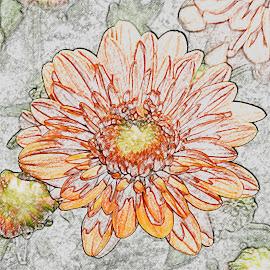 Floral Esssence by Dee Haun - Digital Art Things ( orange, ourlines, 2016, color pencil, lines, d;igital art, 0910$ey4995ce9_cp, flower )