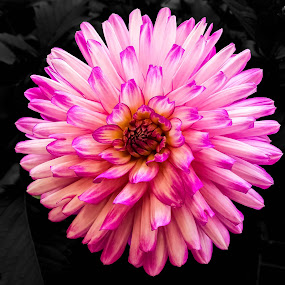 by Peter Murphy - Flowers Single Flower (  )