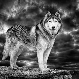 by Susan Hogan - Black & White Animals (  )