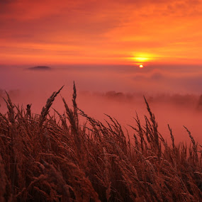 November sunset by Tamas Valentin - Landscapes Mountains & Hills ( nature, sunset, landscape, fogg, mist )