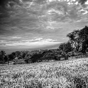Down the Rice Hill by Ferdinand Neman - Landscapes Prairies, Meadows & Fields ( hill, houses, sky, rice field, farmer, black and white, pwcbwlandscapes, morning, farming )