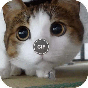 Download Cat Gifs For PC Windows and Mac