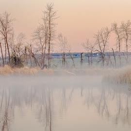 Morning Mist by Garnie Ross - Landscapes Waterscapes ( stream, morning mist, tree, color, lake, morning, river )