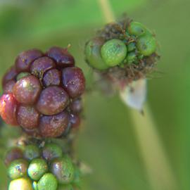 by John Meadows - Food & Drink Fruits & Vegetables