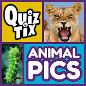 Download QuizTix: Animal Pics Quiz APK for Laptop