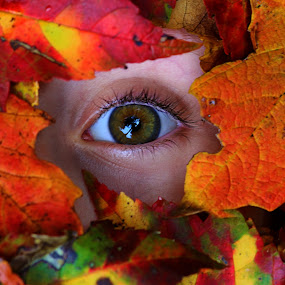 Among the Leaves by Olga Charny - People Body Parts ( orange, fall, leaves, pwcfallleaves-dq, eye )