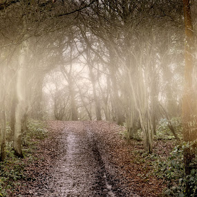 Mists by Angel Weller - Landscapes Forests ( winter, mists, fog, trees, woods )