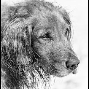 Dog-19.jpg