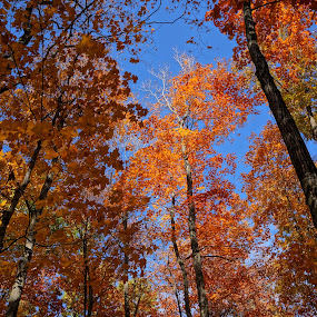 Colored Sky by Jim Czech - Nature Up Close Trees & Bushes ( autumn, , blue, orange. color, fall, color, colorful, nature )