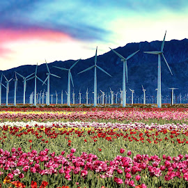 by Rick Nova - Landscapes Prairies, Meadows & Fields