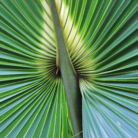 Palm frond by Peg Elmore - Nature Up Close Leaves & Grasses ( palm frond, fronds, leaves )