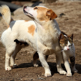 Love is in the air... by Claudiu Petrisor - Animals - Dogs Playing ( love, cat, duet, puppy, dog )