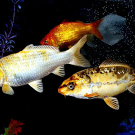 by Janna Morrison - Animals Fish