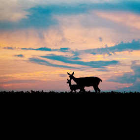 Doe and Fawn by Amanda  Castleman  - Landscapes Sunsets & Sunrises ( animals, nature, sunset, doe, fawn, animal, deer,  )