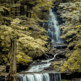 Ricketts Glen by Travis Houston - Landscapes Waterscapes