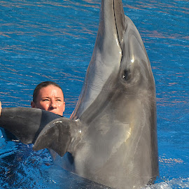Ushaka by Alta Brouwer - Animals Sea Creatures ( training, dolphin, relaxed, show, beauty, swimming, animal )